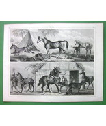 HORSE Arabian Colt Stallion Zebra Ass Norman - SUPERB 1844 Print - $18.51