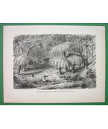 AUSTRALIA Hunting Shooting Lyre Bird Among Fern... - $12.61