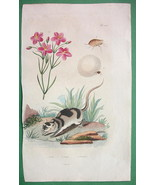 NATURAL HISTORY Beladonna Lily & Water Opossum ... - $15.15