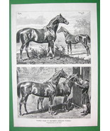 HORSES Prussian Stallions Duke of Edinburgh Marsworth - VICTORIAN Antiqu... - $23.56