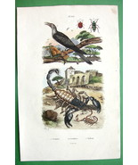 SCORPIONS Rain Bird & Beetles !! SUPERB H/C Nat... - $18.51
