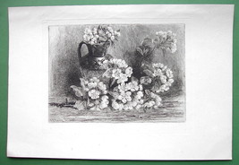 ORIGINAL ETCHING 1883 Print by Murray - Aplle T... - $37.03