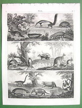 ANIMALS Kangaroo Tapir Armadillo Platypus - 1844 SUPERB Antique Print En... - $17.82