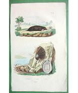 SEA SHELLS & Star Nosed Mole Natural History - ... - $9.90