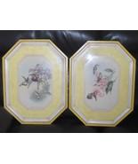 Hummingbird Pictures Set Chrysobronchus Virescens Thaumatias Chironurus... - $149.00