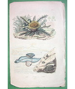 SEA SHELL Mollusk & Thistle - H/C Color Natural... - $9.84