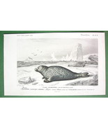 COMMON SEAL Mammals Phoca vitulina Sea Life - H... - $19.78