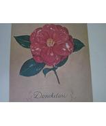 Donckelari  Camellia Portrait Dmitri Vail Art 1... - $35.00