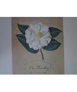 Dr Tinsley Camellia Portrait Dmitri Vail Art Pr... - $49.99