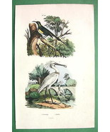 BIRDS Sunbird Spoonbill - 1836 H/C Color Natura... - $13.86