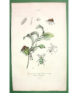 FLOWER Solomon's Seal Beetles - 1836 H/C Color ... - $13.86