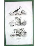 MONKEY Lion Tailed & Bandar Puffin Bird - 1836 ... - $9.41