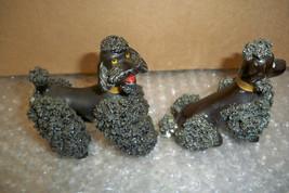 Pair black poodles 1 thumb200