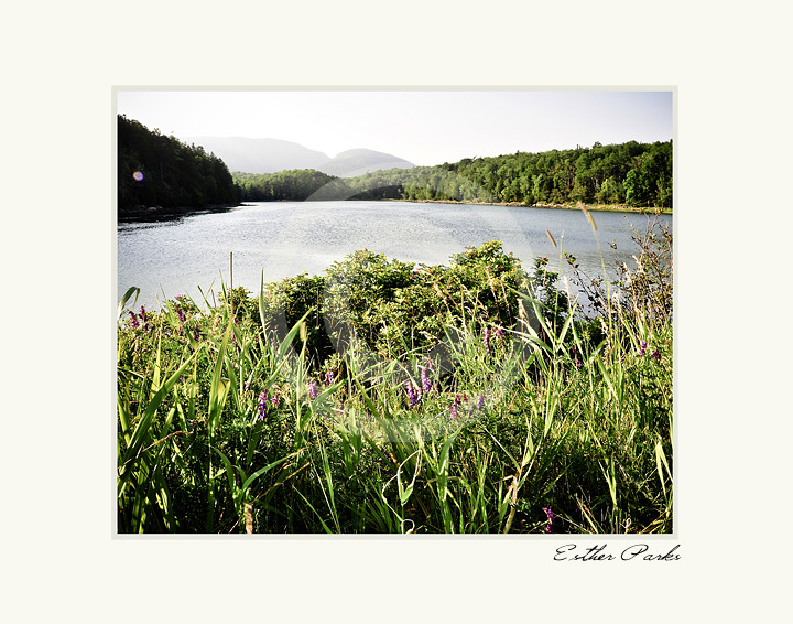 'Flowers with a View' (Acadia National Park) Fine Art Print- 8x10 matted to11x14