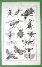 MOTHS Butterflies Beetles Dragonfly - 1852 Original Steel Engraving Print - $13.86