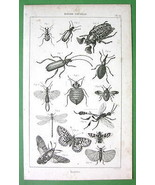 MOTHS Butterflies Beetles Dragonfly - 1852 Orig... - $13.86