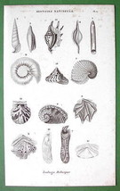 SEA SHELLS - 1852 Original Steel Engraving Print Antique - $9.41