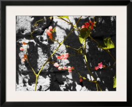 Stones & French Fuchia Black & White Photograph Brilliant Pink Flowers C... - $60.00