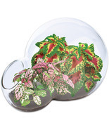 Dunecraft Color Explosion Glass Terrarium With Polka-Dot And Rainbow Plants - £7.43 GBP