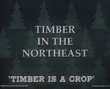 Timber in the Northeast (1950s) logging forestry lumber paper ME NH VT NY DVD