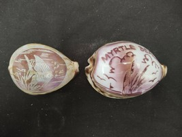 LOT OF 2 ENGRAVED TIGER COWRIE SHELLS TROPICAL FISH & MYRTLE BEACH SEASH... - $18.99