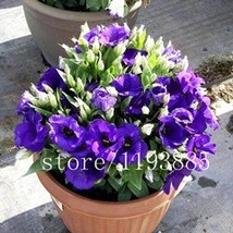 BEST PRICE 100 seeds Rare eustoma Flower Bonsai , FS DIY Flower Seeds - $6.88