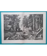 RUSSIA Bears in Russian Primeval Forest - 1880s Wood Engraving Print - $16.20