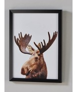 """Moose Picture with Black Frame & PVC Cover Art Paper 11"""" x 15"""" Matte - $29.99"""