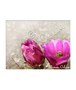 Fine Art Photography Pink Cactus with Bee - $17.98