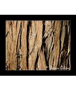 MS-071 Color Art Photo of Cedar Tree Bark - $17.98