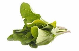 Mustard Komatsuna Japanese Spinach Mustard Non GMO Vegetable Seeds Sow No GMO - $5.71