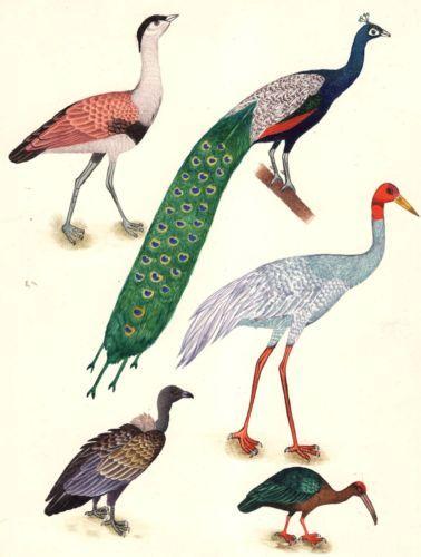 Bird of Paradise Art Handmade Indian Miniature Watercolor Home Decor Painting