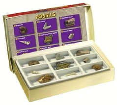 Fossil collection science kit educational toy learning rocks collect min... - $18.69