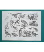 BIRDS Skeleton Vulture Pigeon Turkey Partridge Hawk Crane - 1870 Antique... - $19.80