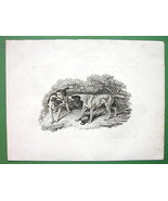 ORIGINAL ETCHING Print - Dogs & Dead Pheasant by Howitt - $19.78