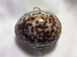 Tortoise color Cowry Sea Shell Brass Hinged Snuff Pill coin Jewely Trink... - $23.76