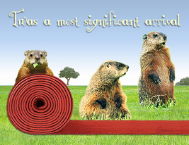 Funny Groundhog Birthday Card: Red Carpet Welcome By Shaboo Prints - $5.00