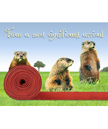 Funny Groundhog Birthday Card: Red Carpet Welcome By Shaboo Prints - $4.25