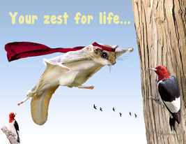 Funny Flying Squirrel Thinking Of You Card: Amazing You By Shaboo Prints - $5.00