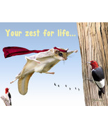 Funny Flying Squirrel Thinking Of You Card: Amazing You By Shaboo Prints - $4.25