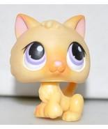 Kitten #248 (Orange, Purple Eyes) Littlest Pet ... - $49.95