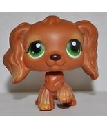 Spaniel #252 (Cocker Spaniel, Brown, Green Eyes... - $79.95