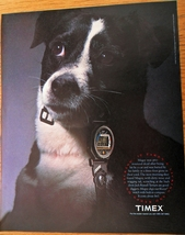 Timex Watches Take A Licking 1991 Print Ad Jack Russell Terrier Photo - $4.50