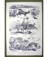 BELRIN ZOO Animals in Winter Deer Antelopes - VICTORIAN Era Print - $14.84