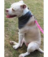Large Dog Bandana, Grey with Blue Stitching - $2.50