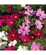 400 Crazy for Cosmos-Cosmos Flower Seeds Mix 10 Species of Wildflower Se... - $29.70