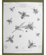 ETNOMOLOGY Insects Wasps Hymenoptera - 1814 REE... - $19.31