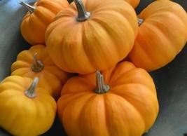 Heirloom Orange Jack Be Little Pumpkin 10 seeds delicious nutritious hea... - $3.47