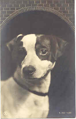 A Ratter Terrier 1906 vintage Post Card.