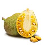 5 seed Organic Fresh Jackfruit Tropics - $11.48